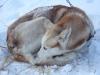 2009-Yukon-43