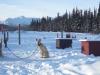 2009-Yukon-83