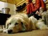2009-Yukon-08