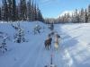2009-Yukon-20