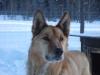 2009-Yukon-70