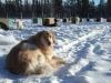 2009-Yukon-74
