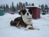 2009-Yukon-75